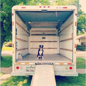 Moving-with-Pets-Dog-in-a-Moving-Truck
